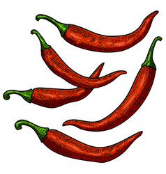 set of chili pepper on white background design vector image