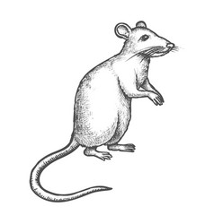 Sketch mouse rat on rear paws hand drawn rodent vector