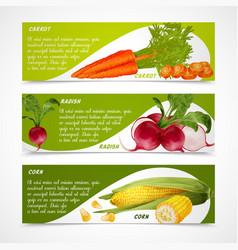 Corn radish carrot banners vector image vector image
