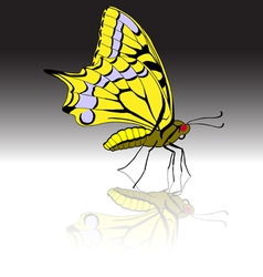 beautiful tropical butterfly vector image vector image