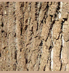 bark pattern background relief texture of an old vector image