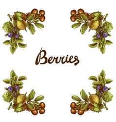Sketch berries frame vector image
