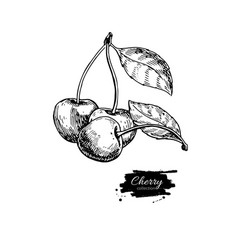 cherry drawing isolated hand drawn berry vector image vector image