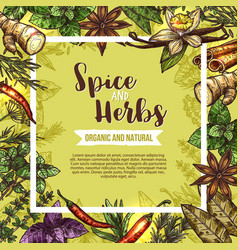 Herb and spice sketch label with seasonings frame vector
