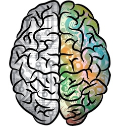 Human brain color vector image