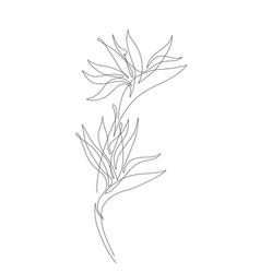 Minimal tropical art tropical monstera leaves vector