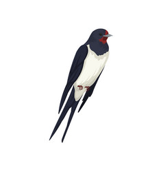 Swallow bird beautiful songbird with forked tail vector