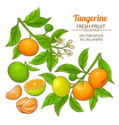 Tangerine fruit set vector