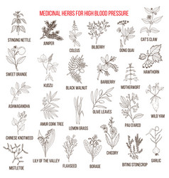 Best medicinal herbs for high blood pressure vector