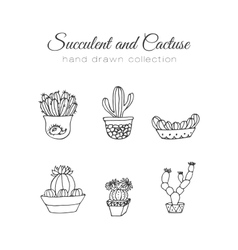 Cactus succulent and cacti vector image