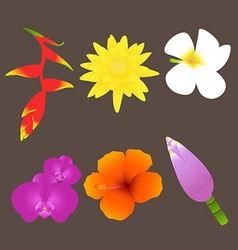 Colorful Tropical Flowers Set vector image