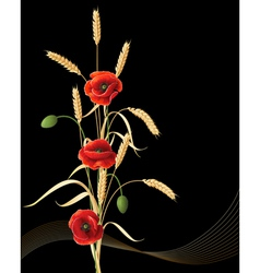 Wheat ears and poppy vector image