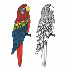A parrot hand drawing vector