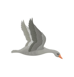 Adult gray goose in flying action side view wild vector