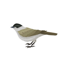 colorful icon of male eurasian blackcap little vector image