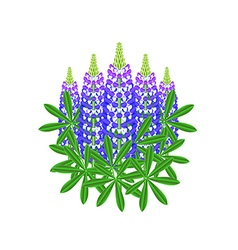 Lupine flowers isolated on white vector image