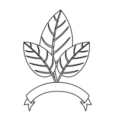 Natural leaves Ecology vector image