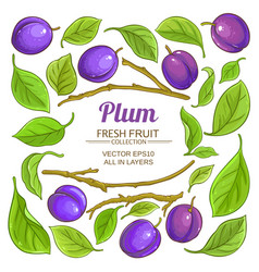 plum elements set vector image