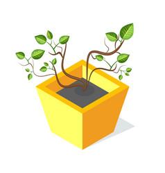 tree in square shape flower-pot green leaf vector image