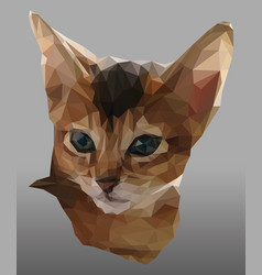triangulated portrait red and white kitten vector image