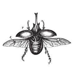 Centaur beetle vintage vector