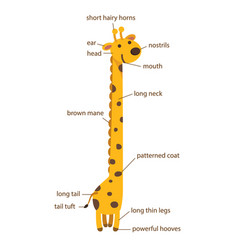 giraffe vocabulary part of body vector image