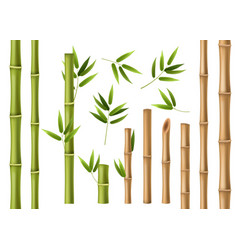 realistic bamboo green and brown bamboo stems vector image