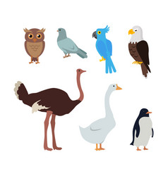 owl dove blue parrot eagle ostrich goose penguin vector image