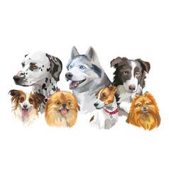 different dog breeds set vector image