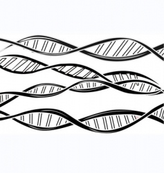 dna model vector image