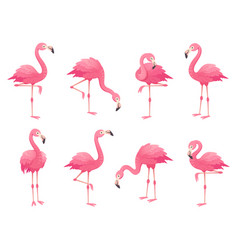 Exotic pink flamingos birds flamingo with rose vector