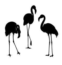flamingo isolated exotic bird vector image