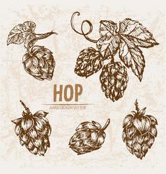 digital detailed line art hop vector image