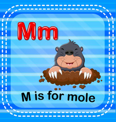 Flashcard letter m is for mole vector