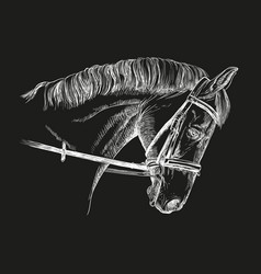 horse head with bridle vector image