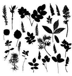 set of plants and leaves silhouettes vector image vector image