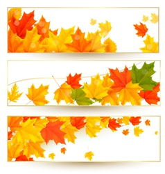 Three autumn banners with colorful leaves in vector image vector image