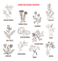 Best herbs for alcohol addiction recovery vector