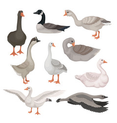 flat set of gray and white geese in vector image