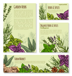 Garden herb and spice seasoning banner template vector