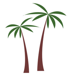 palm tree tropical plant vector image
