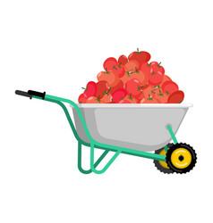 wheelbarrow and tomato vegetables in garden vector image