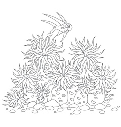 Coral fish and anemones vector image