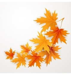 Autumn maples falling leaves background vector