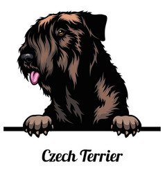 Czech terrier - dog breed color image a dogs vector
