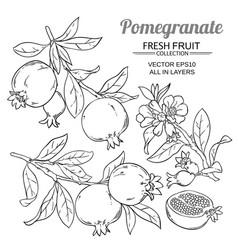 Pomegranate branches set vector
