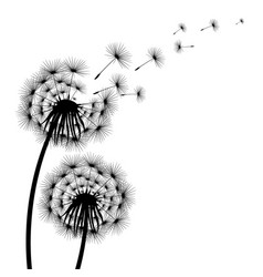 Silhouette of a flowering dandelion vector