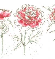 Three drawn peony vector