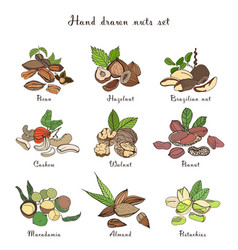 nuts set different kinds collection with almond vector image vector image