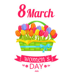 8 march basket and tulips vector image